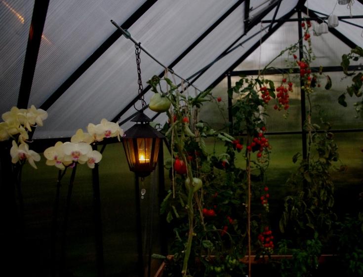 Kasvihuoneessa palaa kynttilä, vaalea orkidea kukkii.