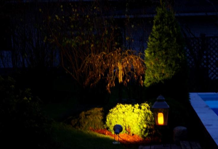 Kohdevaloilla valaistuja havuja ja riippapuu.