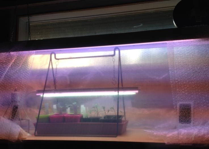 Loisteputkirungon ympärille kyhätty muovisuoja taimille.