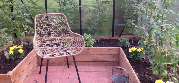 Polyrottinkinen nojatuoli kasvihuoneessa.