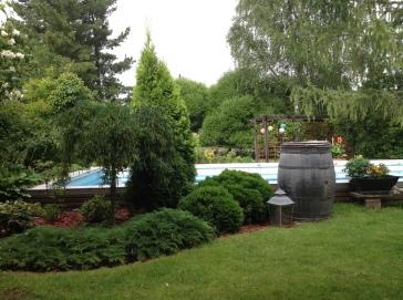 Havuryhmä puutarhassa