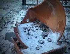 Mehikasveja talvella särkyneeseen ruukkuun istutettuna.