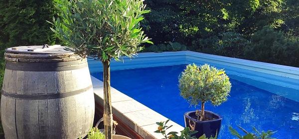 Välimeren alueen kasveja uima-altaan vieressä