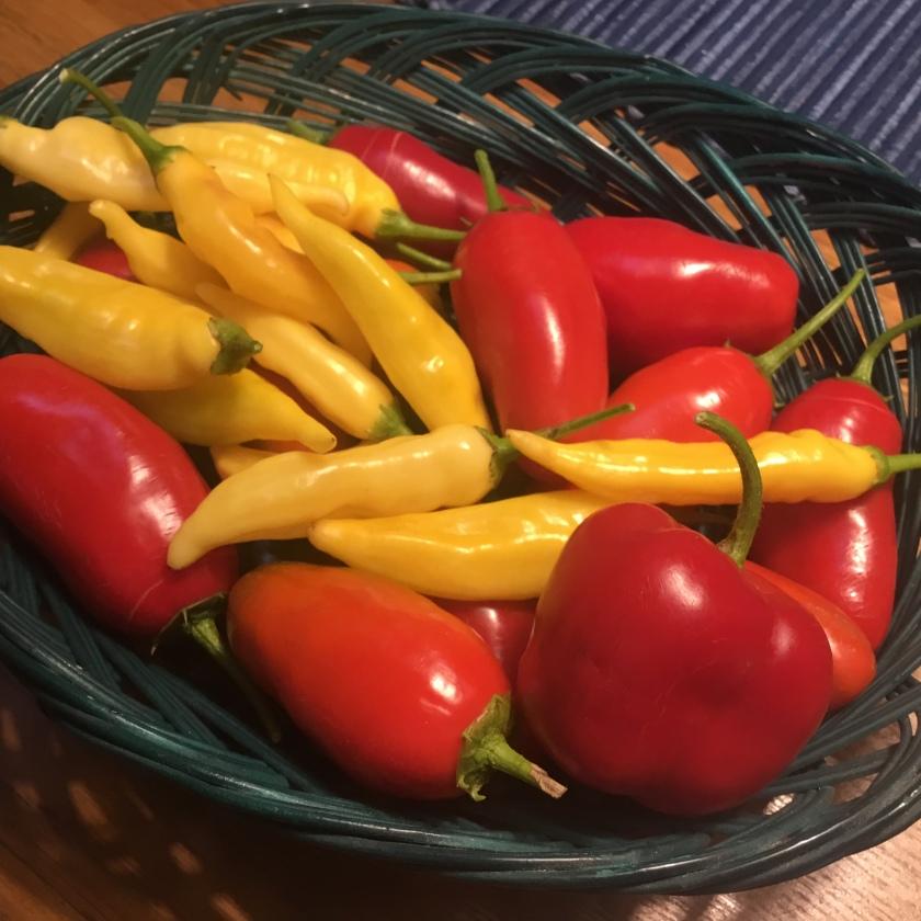 Punaisia ja keltaisi chilejä korissa.