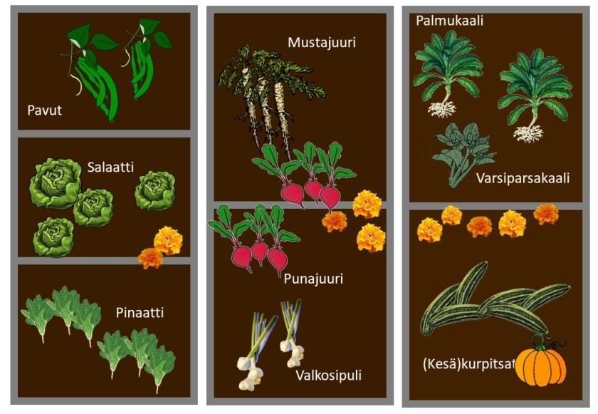 Pohjakuva kasvimaan kasveista.