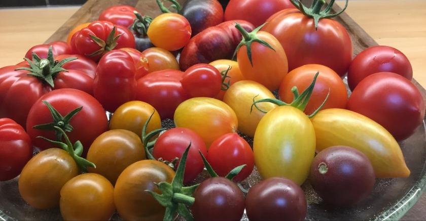 Eri värisiä, eri kokoisia ja eri muotoisia tomaatteja lautasella.